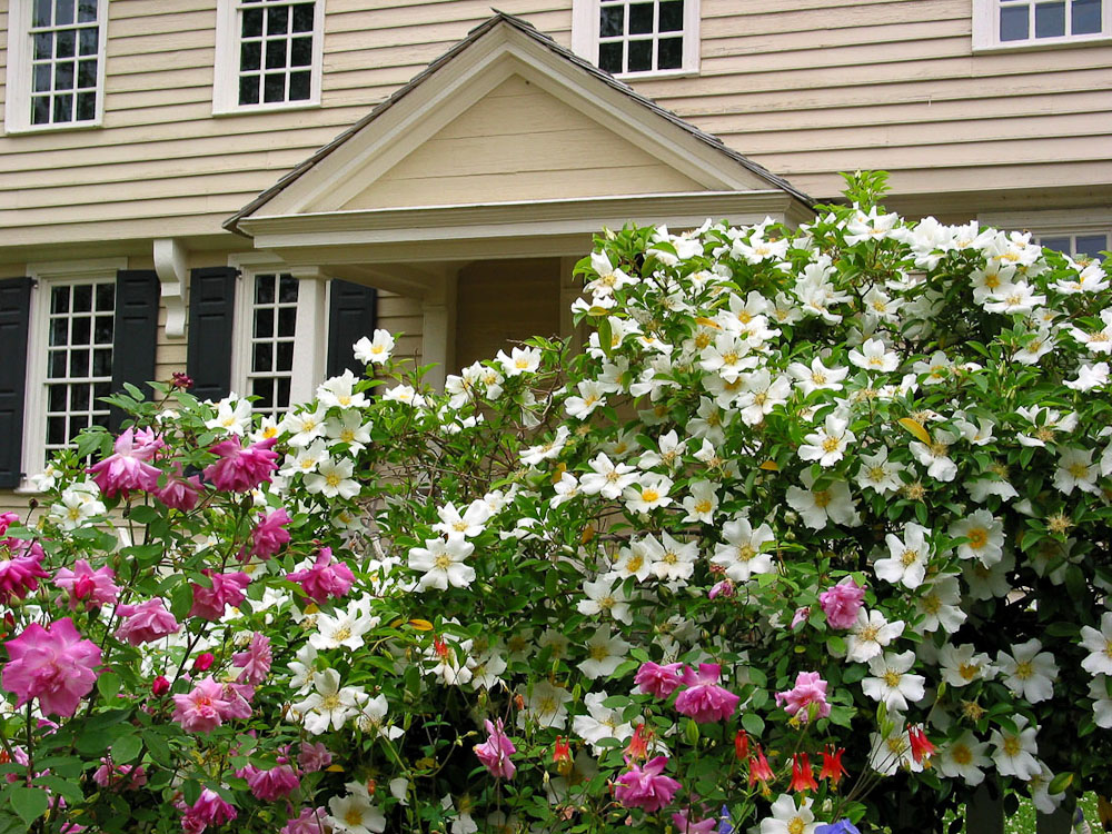 Cupola House Gardens in Bloom - Edenton, North Carolina, Chowan ...
